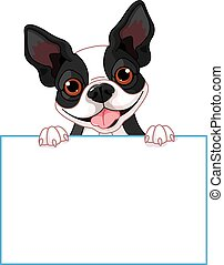Boston terrier sign - Cute Boston terrier holds a sign
