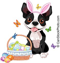 Boston terrier with Easter basket - Cute Boston terrier near...