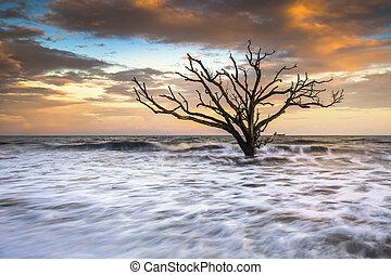 botánica, bahía, edisto, isla, sc, boneyard, playa, ocaso,...