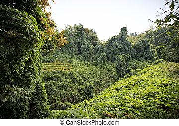 botánico, batumi, parque