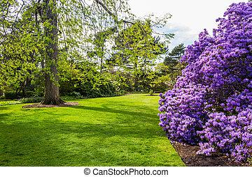 botánico, spring., hermoso, jardín
