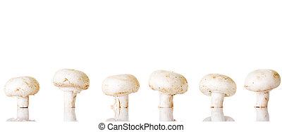 botão, champignon, cogumelo comestível