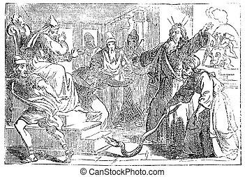bot, israelites., rajz, kígyó, körülbelül, mentes, bibliai, fáraó, changed, szüret, mózes, sztori, megvitat