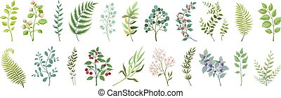 Botanic elements. Trendy wild flowers and branches, plants and leaves green collection. Vector vintage greenery floral bouquet