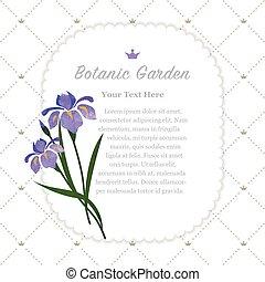botanic kert, színes, természet, bíbor, memorandum, struktúra, vízfestmény, vektor, írisz, keret