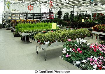 Botanic shop - Interior shot of big green botanic shop
