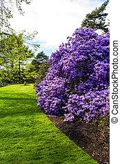 botanica, primavera, bonito, jardim