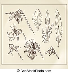Botanical flowers vintage - Vector vintage botanical ...