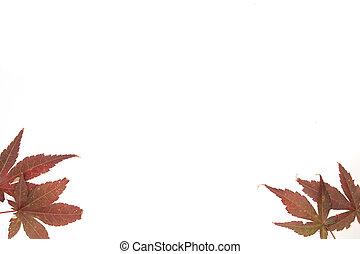 Botanical Frames - A stock photograph of an organic plants...
