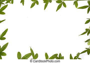 Botanical Frames