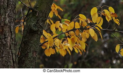 Botanical garden - Close-up shot of vibrant yellow autumn...