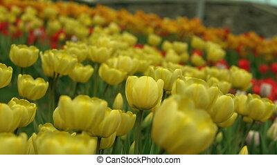 Botanical garden in springtime. - Bright flowers close up....