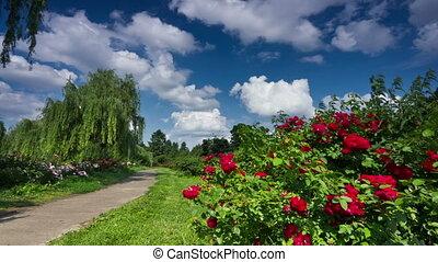 Kiev botanical garden time-lapse. DSLR, RAW quality.