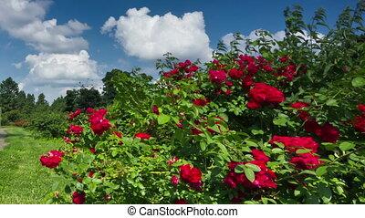 Botanical garden - Kiev botanical garden. DSLR, RAW quality...