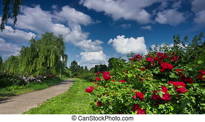 Botanical garden - Kiev botanical garden time-lapse. DSLR,...