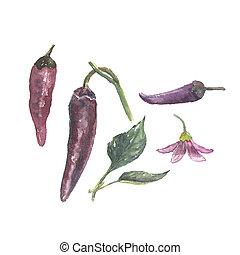 Botanical watercolor illustration of pepper set, flower,...