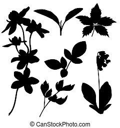 botanico, vettore, set, silhouettes.