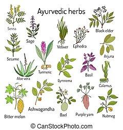 botanik, natürlich, kraeuter, satz, ayurvedic