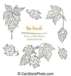 botanik, skiss, sätta, naturlig, frame., drawing., collection., isolerat, hand, bakgrund., mat, humle, herbal, oavgjord, vita fodra