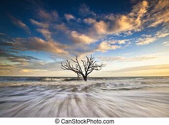 botanique, edisto, as, arbre, chêne, océan, côte, boneyard, ...