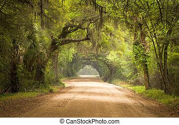 botanique, mousse, terre, île, chêne, route, arbres, baie, plantation, vivant, profond, edisto, espagnol, sc, charleston, sud, forêt