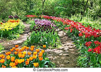botanischer garten, unter, tulpen, in, moskauer