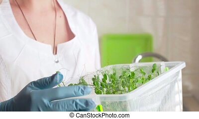 Botanist woman checking agricultural crops in laboratory.