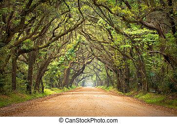 Botany Bay Plantation Spooky Dirt Road Creepy Marsh Oak Trees Tunnel with spanish moss on Edisto Island, SC