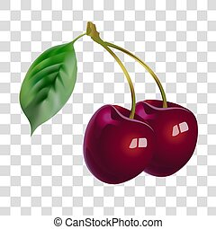 Vector image of fruit. Vector realistic illustration of ripe cherries. Collection of illustration fruit.