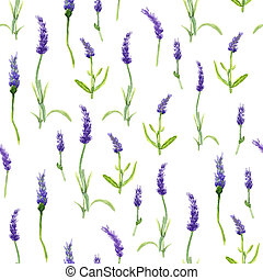 Botany illustration Lavender flowers in a watercolor style on white background. Seamless watercolor pattern