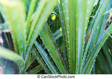 close up of green exotic plant outdoors - botany, nature,...