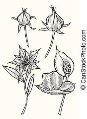 Botany. Set. Vintage flowers. Black and white illustration...