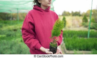 Botany. Young woman scientist holding a green thuja seedling...