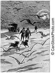 Both dogs were up thousands of birds, vintage engraving. - ...