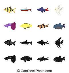 Botia, clown, piranha, cichlid, hummingbird, guppy, Fish set collection icons in black, cartoon style bitmap symbol stock illustration web.