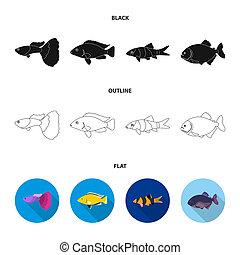 Botia, clown, piranha, cichlid, hummingbird, guppy, Fish set collection icons in black, flat, outline style bitmap symbol stock illustration web.
