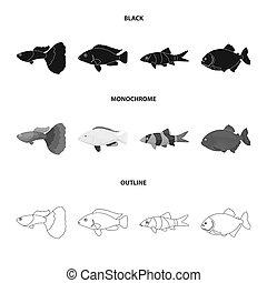 Botia, clown, piranha, cichlid, hummingbird, guppy, Fish set collection icons in black, monochrome, outline style bitmap symbol stock illustration web.