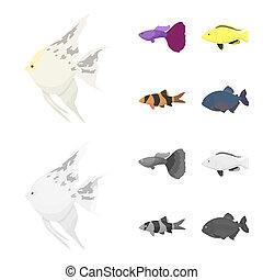 Botia, clown, piranha, cichlid, hummingbird, guppy, Fish set collection icons in cartoon, monochrome style bitmap symbol stock illustration web.