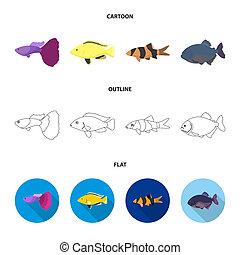 Botia, clown, piranha, cichlid, hummingbird, guppy, Fish set collection icons in cartoon, outline, flat style bitmap symbol stock illustration web.