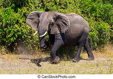 Lone elephant at the watering hole