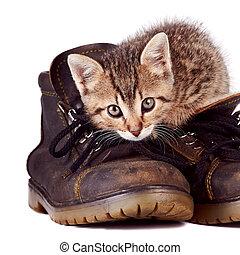 bottes, chaton