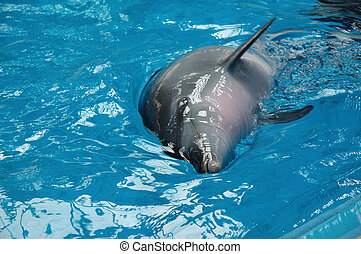 Bottle nose dolphin