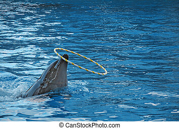 Tursiops truncatus - Bottle-nosed dolphin Tursiops truncatus...