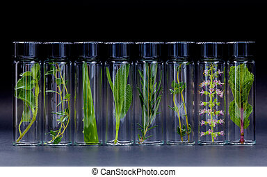 Bottle of essential oil with herb holy basil flowers, rosemary,oregano, aloe vera, sage,basil and mint on black background.