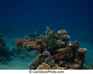 bottle on a coral reef