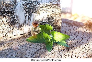 Bottle with healing oil of lemon balm herb on birch tree ...