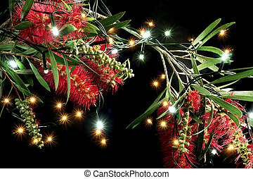 Bottlebrush Flowers and Fairy Lights