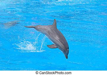bottlenose海豚