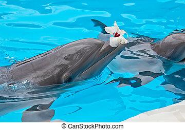 Bottlenose dolphin - bottlenose dolphin in aquarium with ...