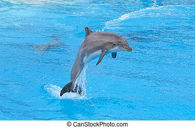 Bottlenose dolphin in the aquarium